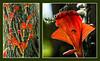 Unusual Orange Epiphyte