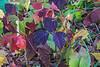 Poison Ivy spectrum of colors