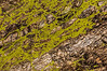 Lichen Landscape - a matter of scale