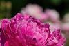 Flowers love dew.  Photographers do, too.