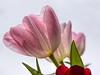 Spring Forward