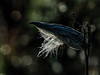 Featured:  Glorified by dew and morning light