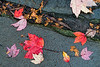 featured:  finding a composition in fallen leaves