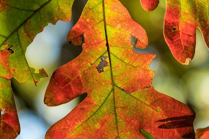 Featured:  Color changes can't disguise the torn, tattered, and chewed on bits