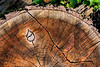 Featured:  Odd inclusion.  Wood abstract