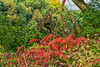 Featured:  Early autumn in The Arb