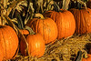 Featured:  Jack-o'-lanterns in waiting