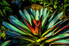 Featured:  Giant bromeliad, filtered version