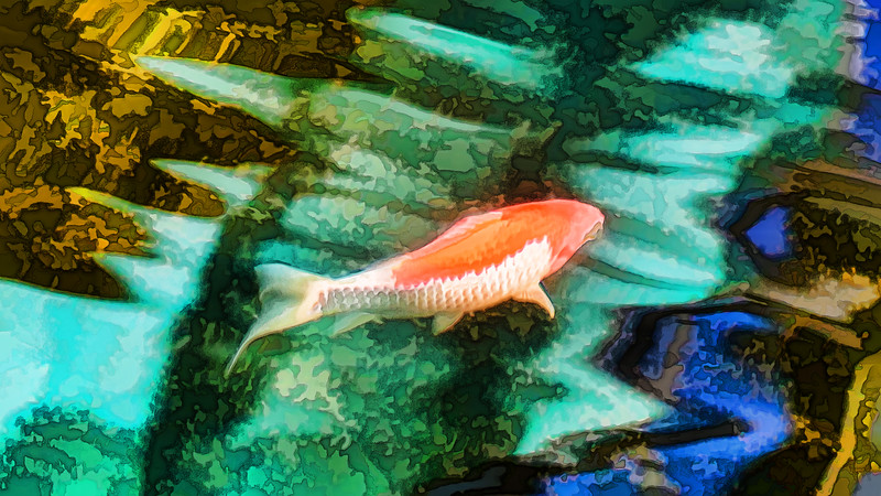 Featured:  Enjoy koi? (filtered version)