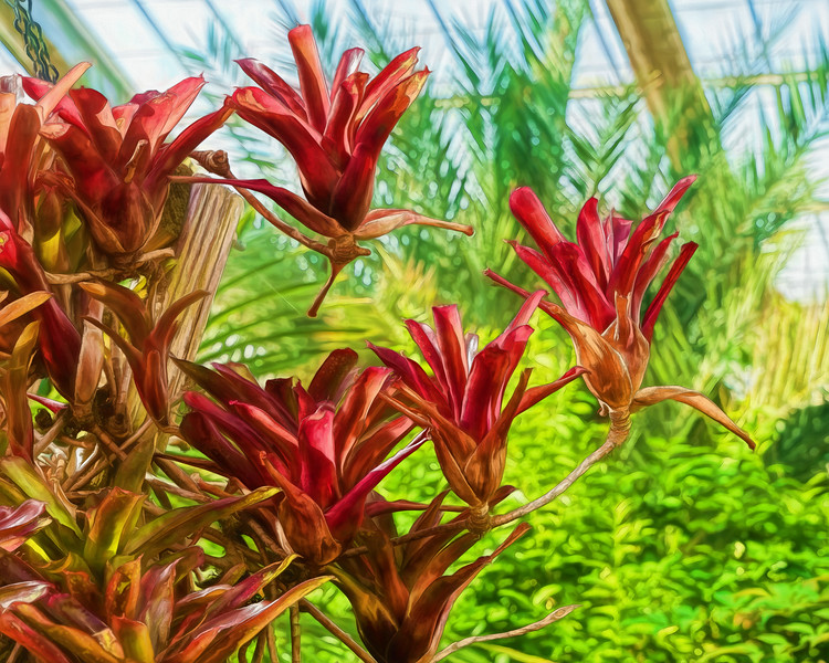 Featured: Neoregelia 'Fireball' detail, filtered version