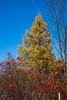 Primarily Autumn