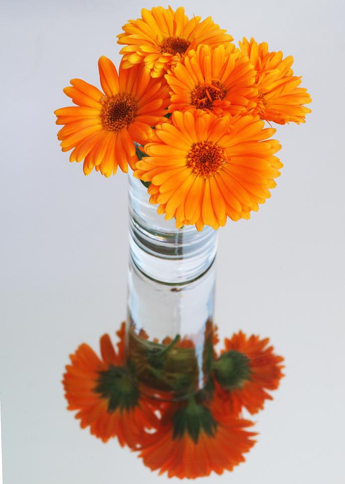 100109 25/365 Oct 1-09 Mirrored Flowers