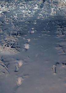 050 Nov 22/10  Deer tracks in the fresh snow.  Thank you SmugMug for the progress bar.