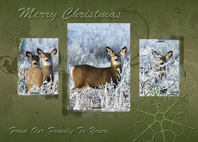 068 Dec 13/10  First try at a Christmas card.  Used a free frame from Onone Software  http://www.ononesoftware.com/products/photoframe/frames.html  They have provided a dozen free frames in psd format for photoshop and the free snowflake brushes from meldir at deviantart  http://meldir.deviantart.com/art/snowflake-brushes-13486710