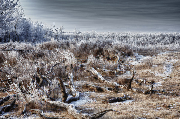 """262 Nov 8/11 Hoar frost in the pasture.  The rest of the photos from this morning can be seen here <a href=""""http://susanwildephotography.blogspot.com/"""">http://susanwildephotography.blogspot.com/</a>"""