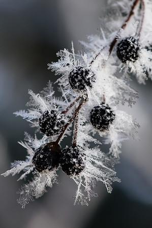263 Nov 9/11 Hoar frost macro