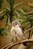 243 Oct 6/10 A little bird from the zoo.
