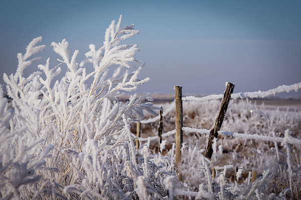 264 Nov 10/11 Hoar frost on the fence line