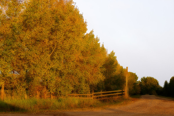 224 Sep 14/11 Another scene from my drive to work in the morning.  The sun came out for a few brief moments where I was in the right place at the right time.  This time I was lucky and could position the car and shoot out the side window.