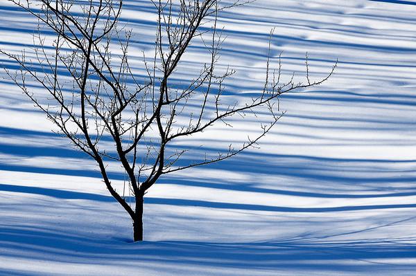 052 Feb 19/11 Snow shadows across the yard.