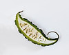 073 Mar 15/11 Indian Bitter Melon