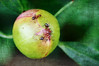 167 Jul 5/11 Three Ants