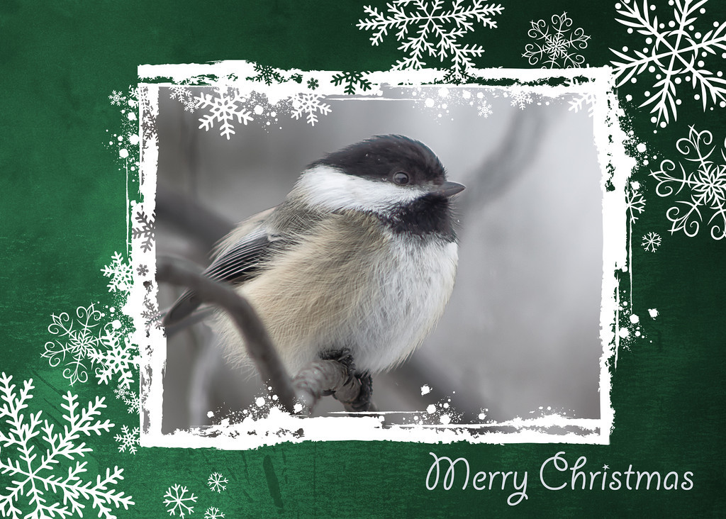 179 Dec 24/12  I know I've been AWOL from this group for a while but I did want to wish everyone a very Merry Christmas.