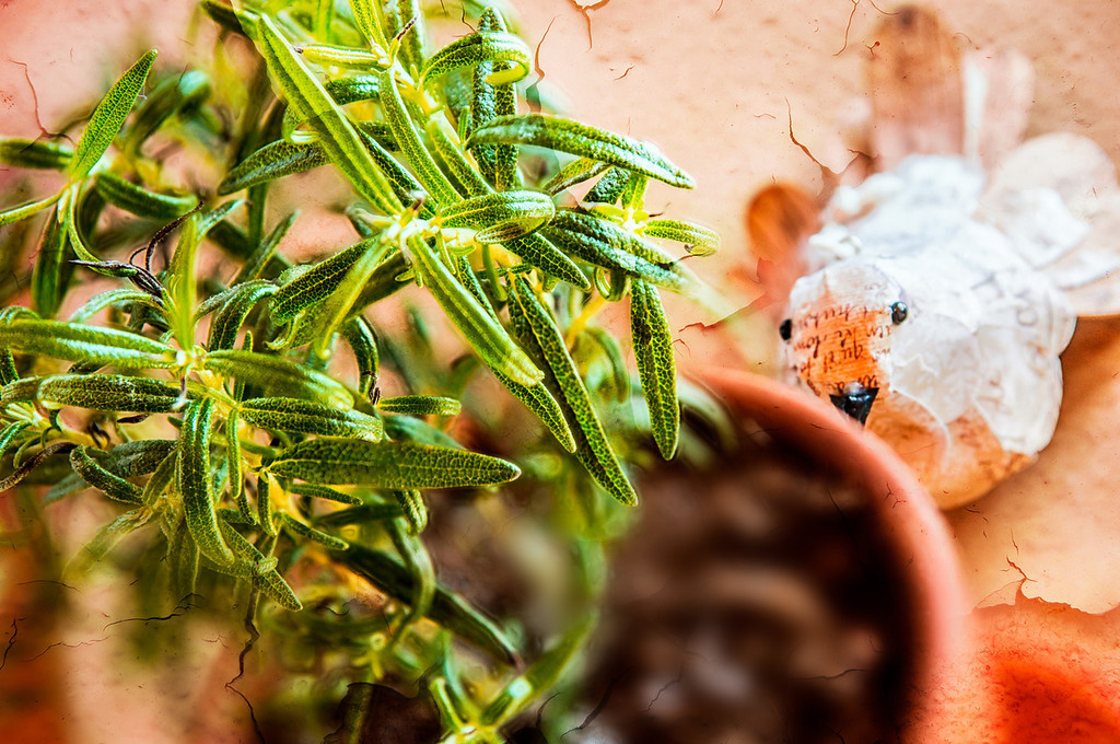090 Mar 31/12 Adding a little spring to the kitchen window with a pot of Rosemary.