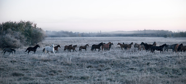 150 Oct 6/12 Horses in the morning fog.<br /> <br /> Critique always welcome.