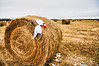 160 Oct 24/12 On the way home from work yesterday, we stopped to check out a field of hay bales.  Temperature was around 0 Celcius (32 Fahrenheit) so Jennifer huddled up to a bale to keep warm.