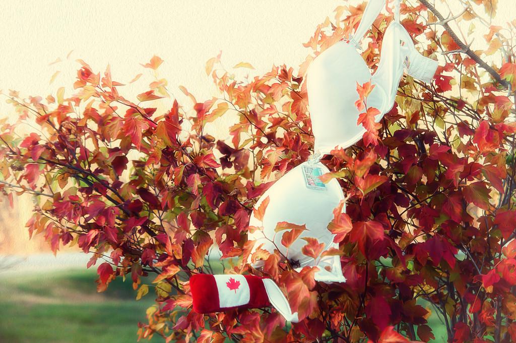 159 Oct 23/12 Just hanging around.