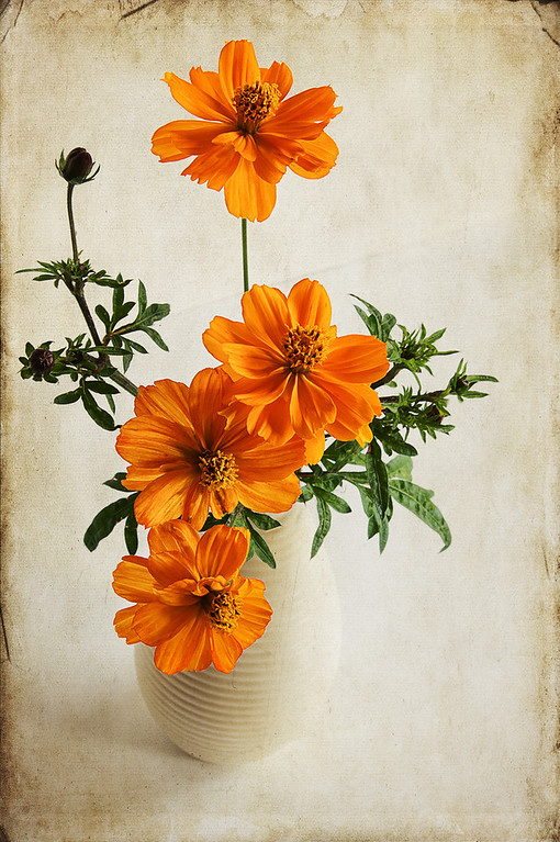 """140 Sep 20/12  A little texture on orange flowers.  The original can be seen here. <a href=""""http://www.wildelifephotography.com/Photography/Flora/10027831_bDtfcw#!i=2098152712&k=HJD2jh8"""">http://www.wildelifephotography.com/Photography/Flora/10027831_bDtfcw#!i=2098152712&k=HJD2jh8</a><br /> <br /> Critique always welcome."""