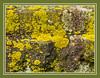Bright Lichen on Dark Stone