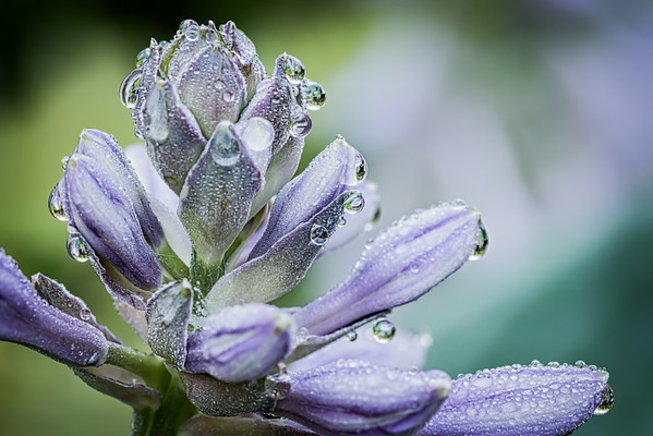 July 29 2014 It's been a couple of years since I've had the time to sit patiently and see the morning dew drops.  It feels kind of nice.