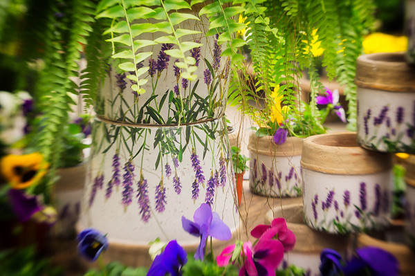 097 Apr 7/13 Taking a break from scenes to and from work, yesterday was a camera club meeting at a greenhouse where I found this pot display decorated with spring pansies.