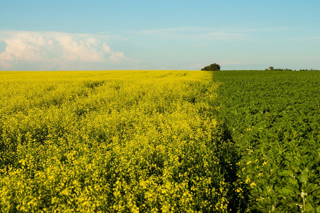 July 25 2014 Crops in Alberta
