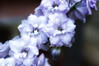 """202 Aug 4/13 """"D"""" is for Delphinium and Donna"""