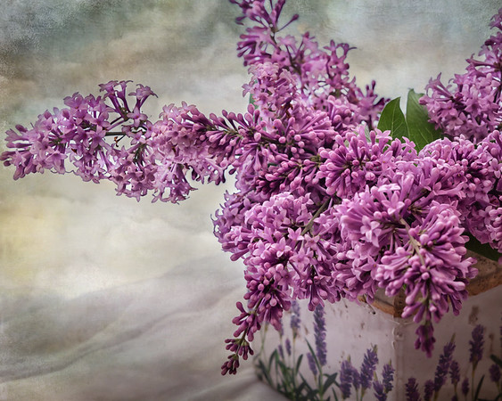 2015-06-16 When all the lilacs have faded, I have one tree that comes out in bloom. For the first time in a long time, working with a little texture.