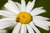 177 Jun 30/13 A bug's world