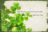 076 Mar 17/13 Happy St. Patrick's Day to all