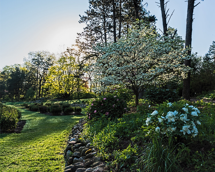 Spring morning at the Peony Garden (cropped version)