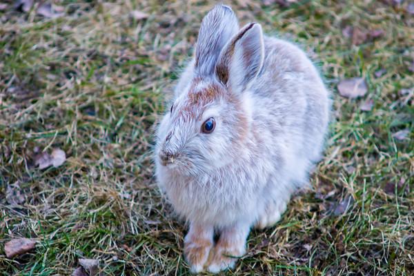 2017-04-15 Rabbit