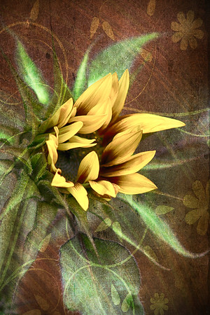2017-07-28 Textured Sunflower