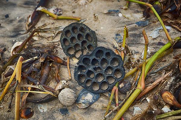 187/365 Seashells