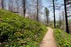 194/365 Path
