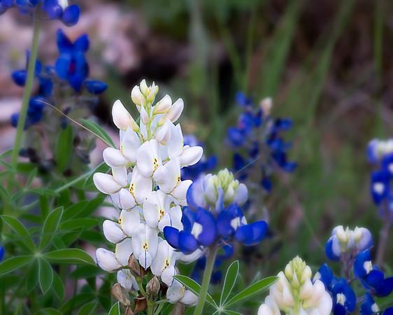 29/365 Flower Close Up