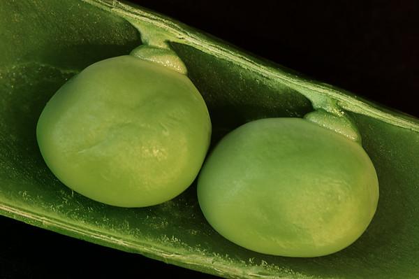 85/365 Peas