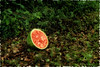 171/365 Watermelon