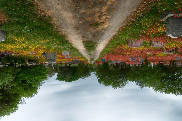 134/365 Upside Down