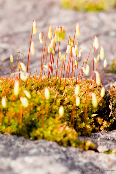 #73 Sprouting Moss